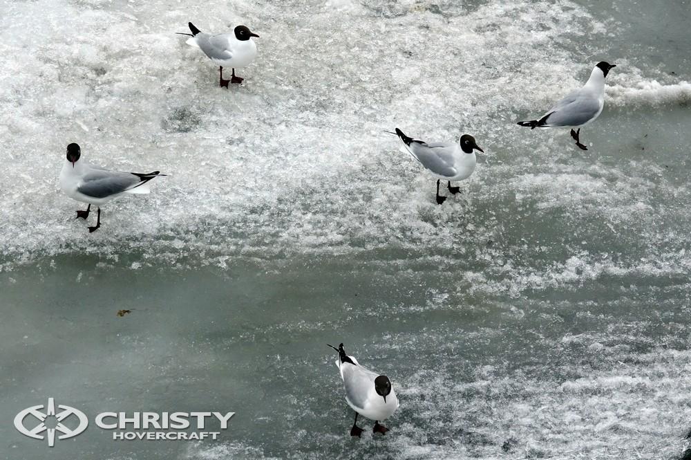 Воздушная подушка Christy-5143 может ходить по тонкому льду и в межсезонье по шуге | фото №24