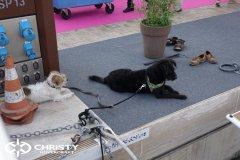 Международная выставка катеров и лодок в Каннах Yachting Festival Cannes | фото №24