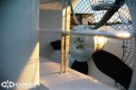 Судно на воздушной подушке Wildfire от  Airlift Hovercraft | фото №28